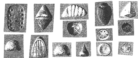 molio-zenklai